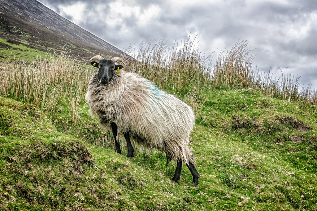 King of the hill - Achill Island