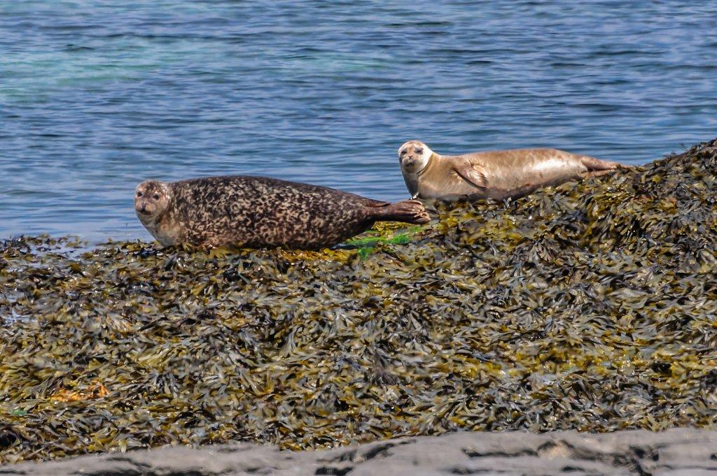 Seal Colony - Inishmore